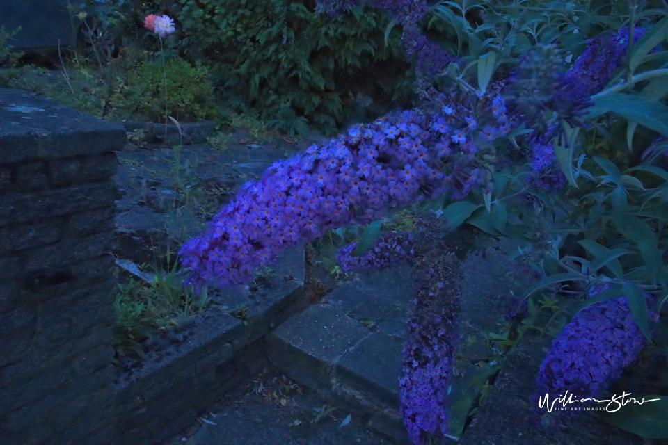 Purple Alongside - Limited Edition, Fine Art
