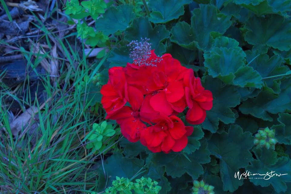 Reddish Alone - Limited Edition, Fine Art