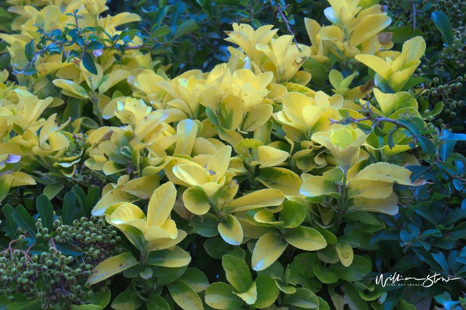 Yellowish Green - Limited Edition, Fine Art