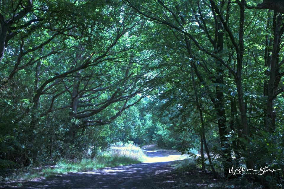 Dense Pathways - Limited Edition, Fine Art