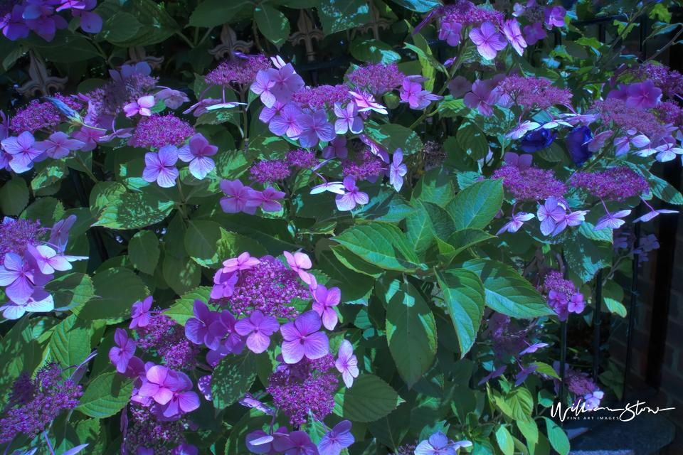 Pinkish Greenly - Limited Edition, Fine Art