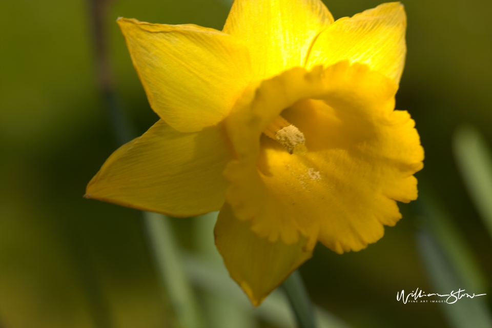 Lots of Yellow - Limited Edition, Fine Art
