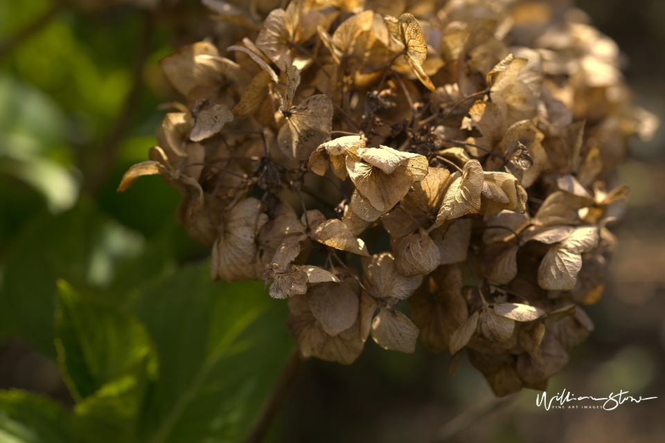 Crumbled Brown - Limited Edition, Fine Art