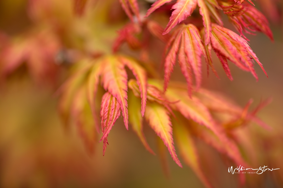 Thinly Reddish Green - Limited Edition, Fine Art