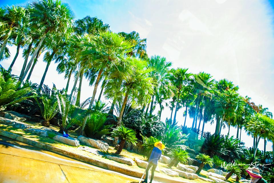 Palm Along - Limited Edition, Fine Art