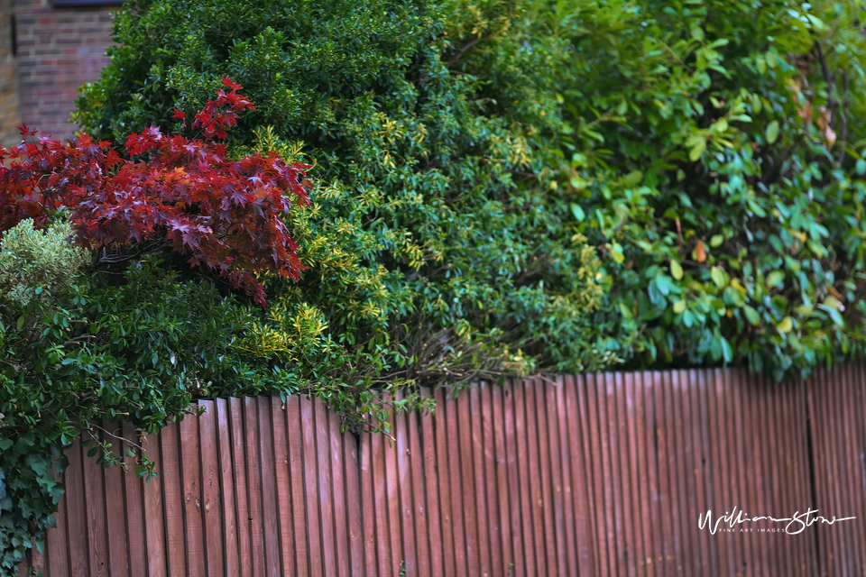 Fenced In - Limited Edition, Fine Art