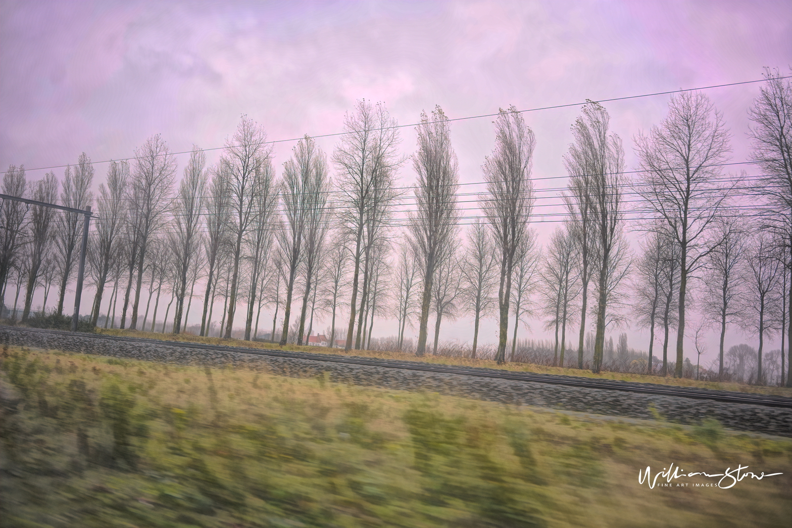 Fine Art, Limited Edition, Straight Trees Ahead, London.